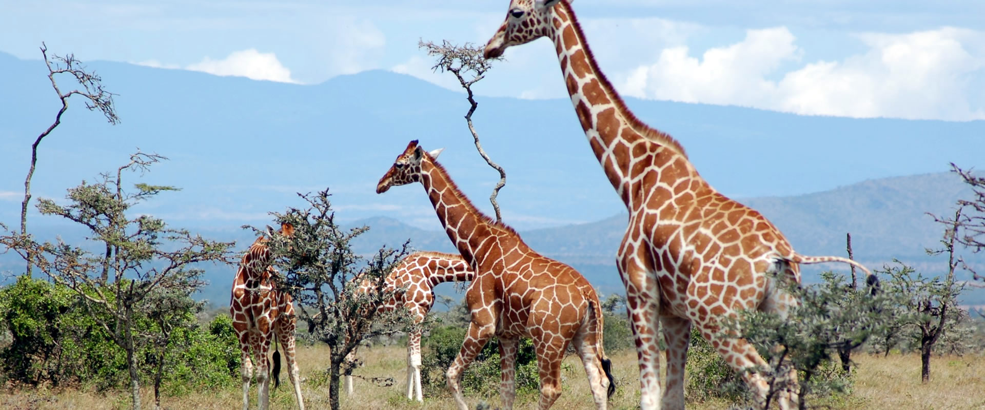 7 nights samburu, nanyuki, nakuru, mara